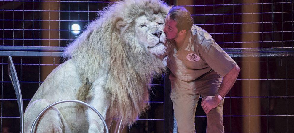 Circus Krone backstage: von Tierlehrern lernen