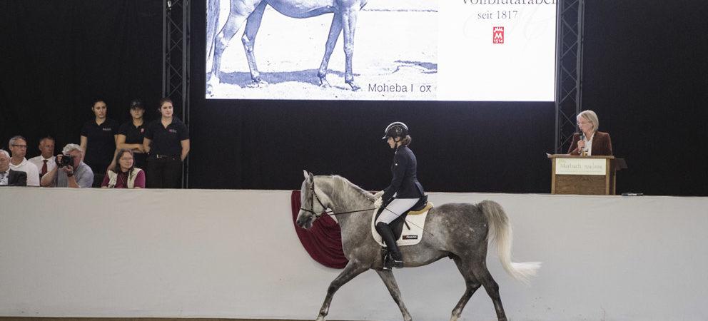 Malakil und Safi mit Anja Beran beim Tag des Arabischen Pferdes in Marbach