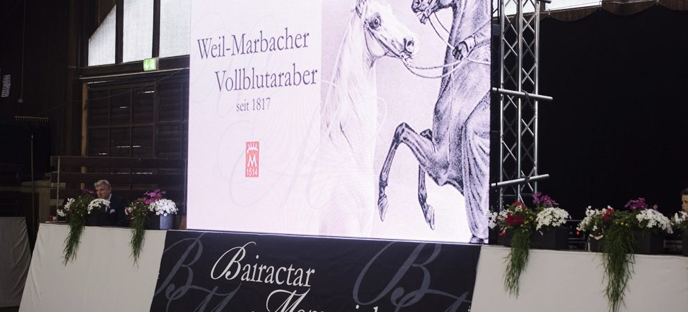 200 years of Weil-Marbach pure-bred Arabs
