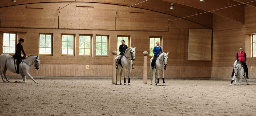 Sunday Morning Work Sessions 2017 - experience classical horse training 'close-up'