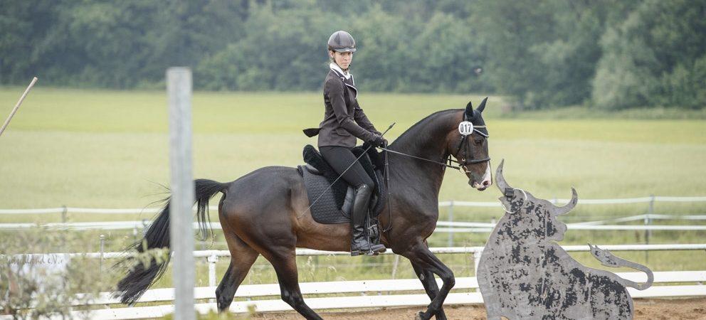 Vera Munderloh erneut erfolgreich in der Working Equitation